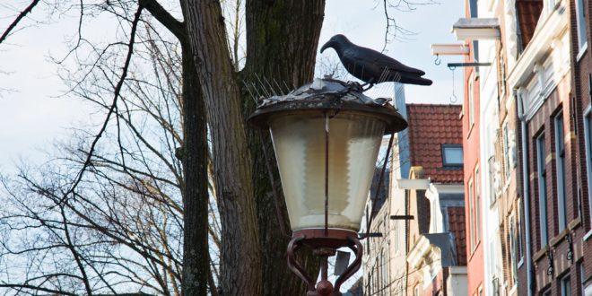 Прямо в город Амстердам