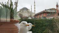 Стамбульская солянка